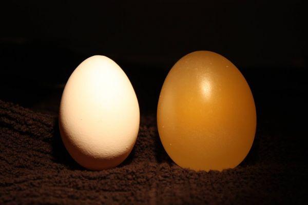 Резиновый попрыгунчик с помощью яйца и уксуса