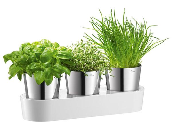 Как вырастить продукты питания: овощи, фрукты, зелень дома