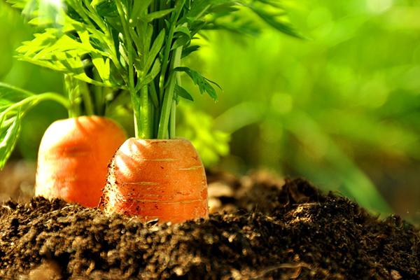 Продукты питания для очищения организма